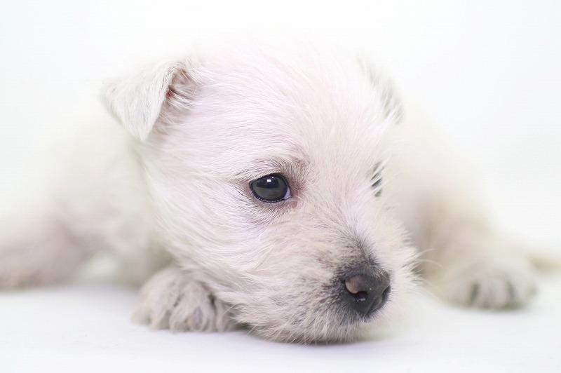 子犬たちの写真(拡大)